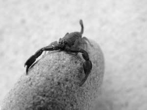 escorpio en el amor